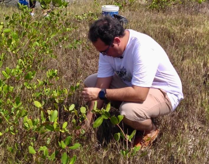 Dia da Árvore: Davi Maia realiza plantio de mais de 1000 mudas de mangue